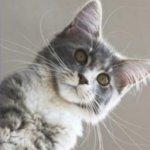 cool names for kittens