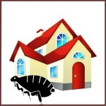 fleas in house