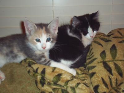 luke and leia the twins