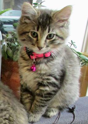 Kittytwo