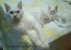 Coockie & her baby Mist both have the dominant masking white gene
