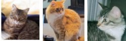 maine coon rescue stories
