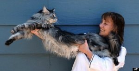 worlds longest cat