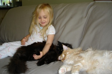 little girl snuggling two maine coon cats