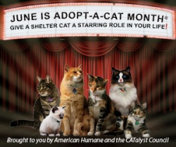 this is adopt a cat month