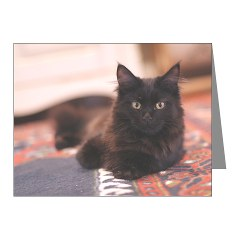 Cat christmas cards from our own cafepress store this pack of black maine coon cat christmas cards features a professional photo of our own alice in her teenage days m4hsunfo