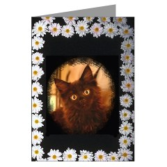 black maine coon cat valentine kitten card