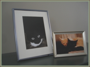 framed cat and kitten pictures