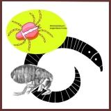 cat parasites