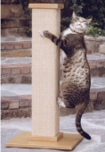 cat scratching post shopping