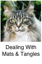 Dealing With Mats and Tangles