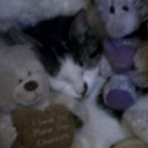 kitty with stuffed animals