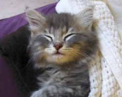 dinah the cute fuzzy kitten