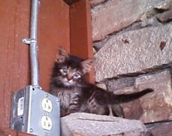cute fuzzy kitten up high
