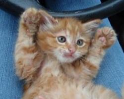 cute fuzzy oren