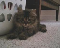 cute fuzzy tessie