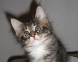 cute fuzzy tyson