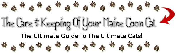 The Care And Keeping Of Your Maine Coon Cat