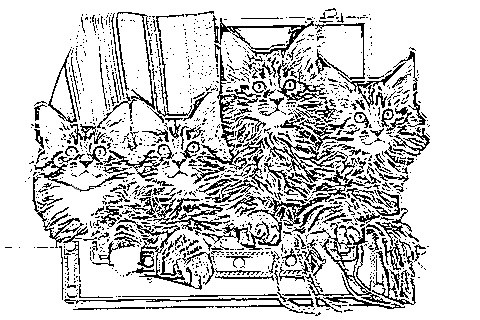 return to maine coon cat