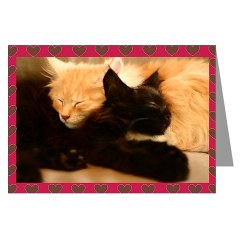 maine coon cat valentine kitten card