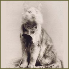 mysterious history of maine coon cats