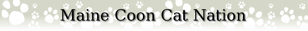 maine coon cat nation
