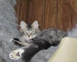 cute fuzzy ivan