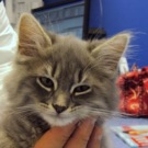 cute foster kitten