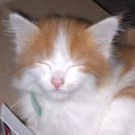 small red and white kitten