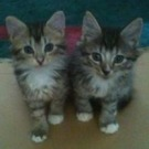 two small mix kittens