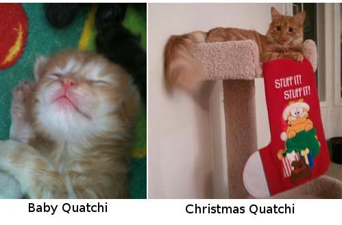 Quatchi