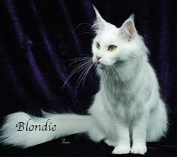 Blondie is a vision in White
