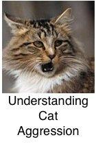 Feline Aggression
