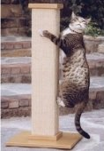 cat scratching post shopping