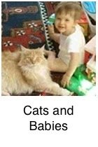 Cats As Family Pets