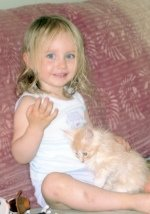 little girl and tiny maine coon kitten