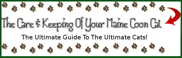 Ultimate Maine Coon Guide