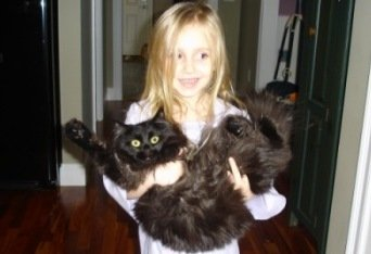 young girl carrying black maine coon cat