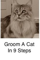 Groom A Cat In 9 Steps