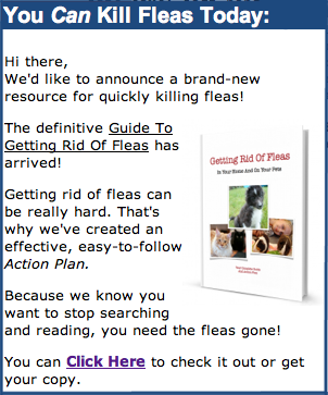 kill fleas today