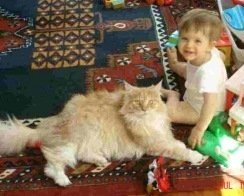big maine coon cat with baby