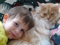 maine coon cat and young child