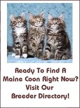 Maine Coon Cat Breeders USA