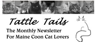 maine coon cat newsletter