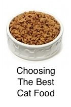 Choosing The Best Food
