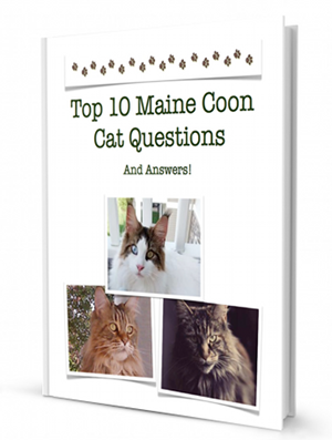 Top 10 Maine Coon Cat Questions and Answers