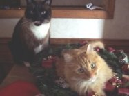 two cats from merlins hope texas cat rescue