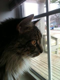 felted cat portrait