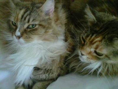 Fifi and Annie