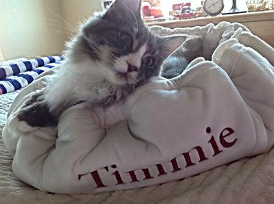 Timmie